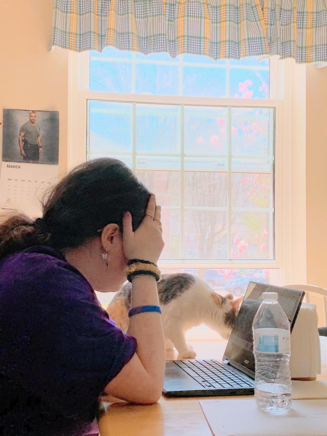 Maddy Feldwick sits at her kitchen table for school, feeling stressed during a google meet. Penny, her cat, helps her get through her classes.